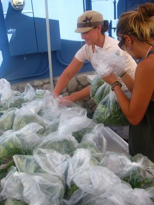 Cora and Lindsay Bagging Leafy Greens